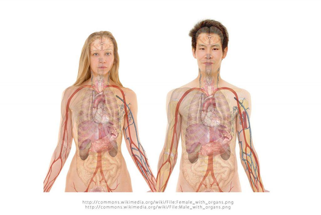 גוף באדם