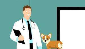 רופא בעלי חיים